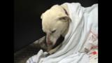 Raymond dog rescue